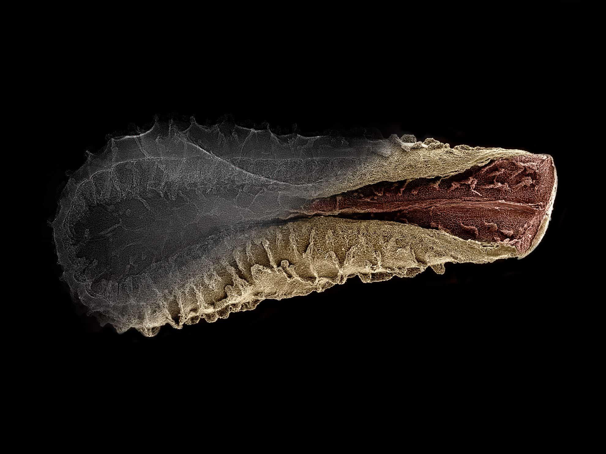 Microscopy image of seed